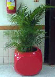 "19"" Dice Planter (RED) Dimensions H:19"", W: 17.5"", Mouth: 12"" Completely Hollow) @ INR 3000"